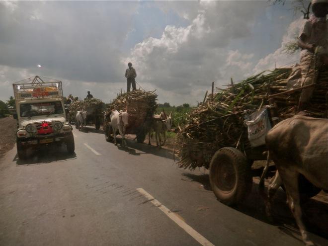 Sugar cane in India