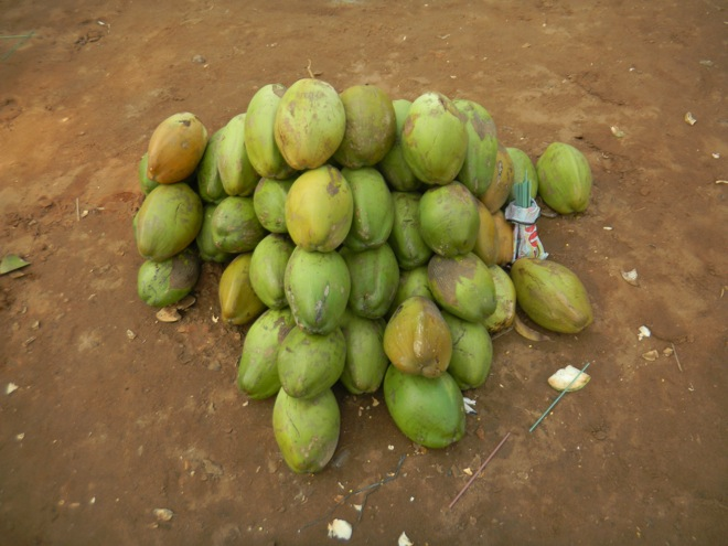 coconuts in India